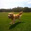 Shilo running